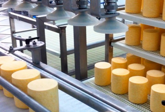 Automatic loading of cheeses on shelves with trays #2